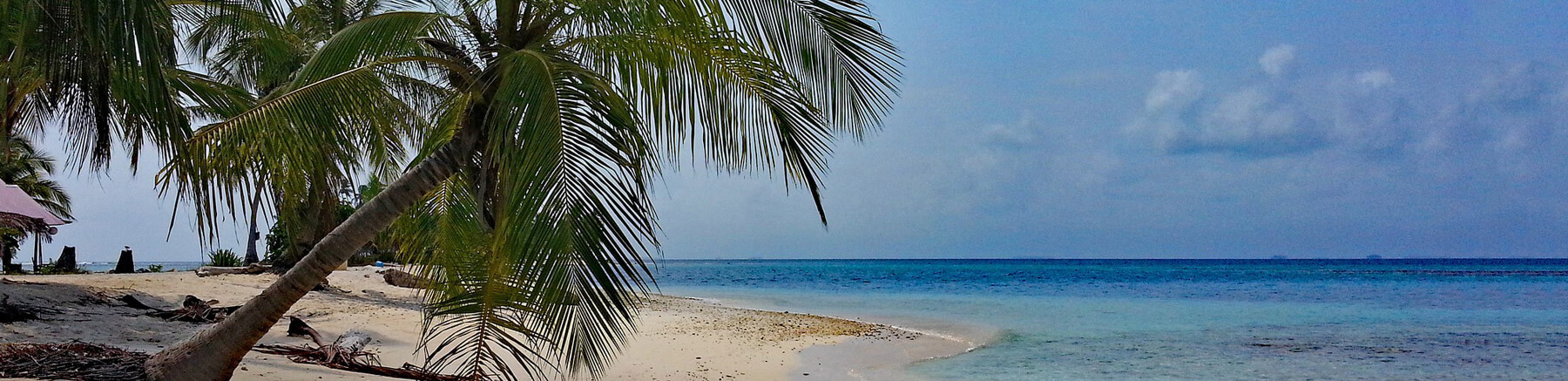 Beautiful quiet beach in Panama with a palm tree in the foreground